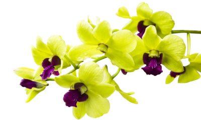 Ý nghĩa và biểu tượng của hoa Lan