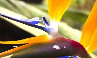 Ý nghĩa và biểu tượng hoa chim của thiên đường