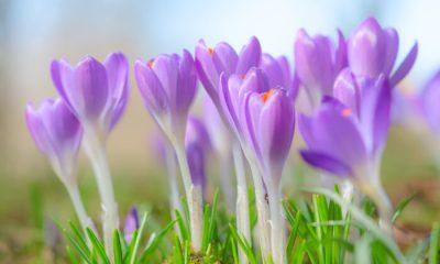 Ý nghĩa và biểu tượng hoa nghệ