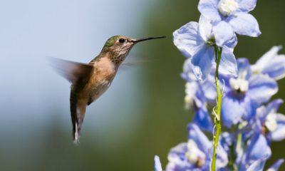 Ý nghĩa và biểu tượng hoa phi yến thảo