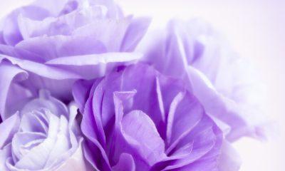 Ý nghĩa và biểu tượng hoa lan tường