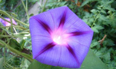 Ý nghĩa hoa Thường Xuân
